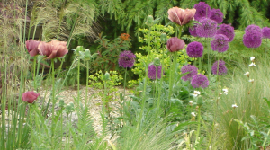 Hertfordshire garden design and planting by Amanda Broughton