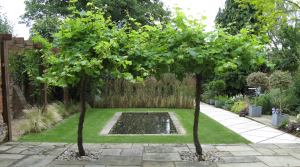 Formal pond with informal planting by Amanda Broughton Garden Design