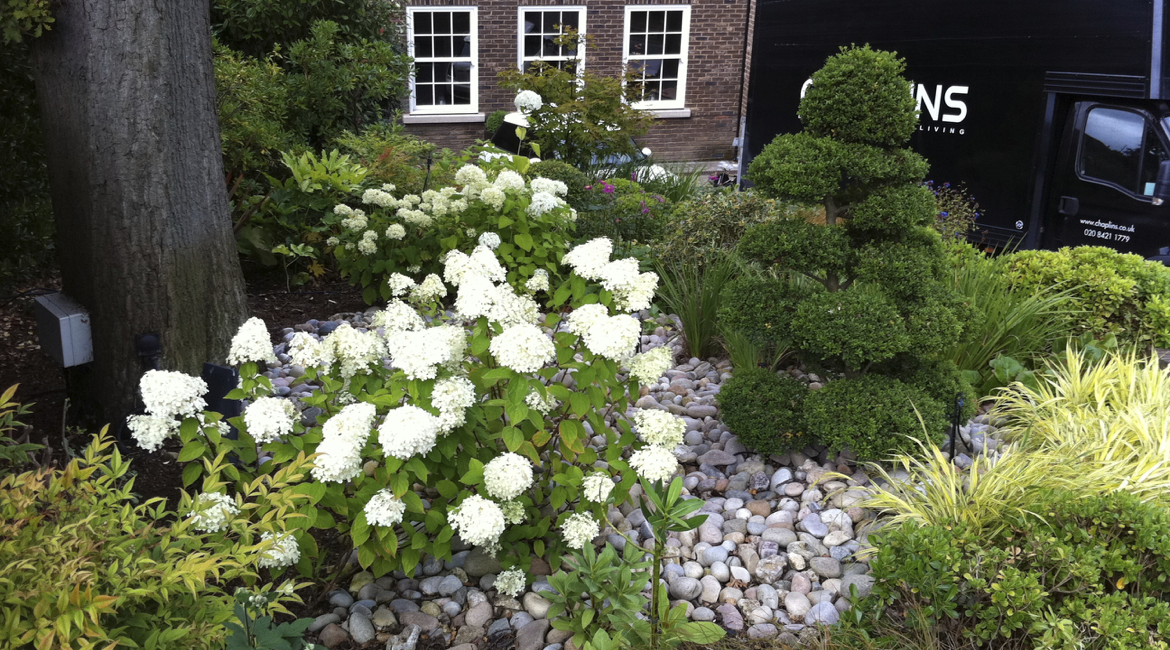 Structural planting mixed with perennials by Amanda Broughton Garden Design