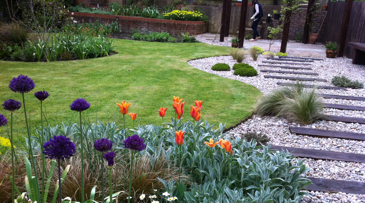 Curvaceous lawn in Totteridge Lane garden by Amanda Broughton Garden Design