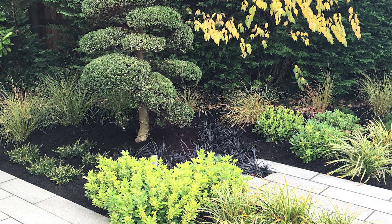 Herts. garden patio and planting in Japanese inspired garden
