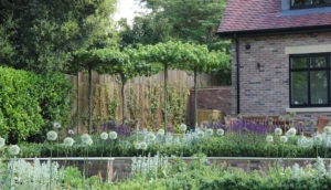 Contemporary new build garden design in Hertfordshire by Amanda Broughton Garden Design