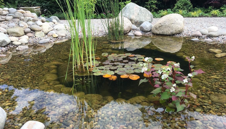 Feature pond in Japanse garden in Hertfordshire