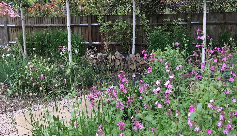 Meadow planting around Garden Office by Amanda Broughton Garden Design