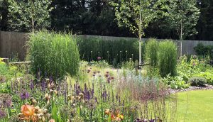 Prairie style planting with perennials, bulbs and Birch trees