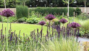 Grasses, perennials and Alliums in Hertfordshire garden design