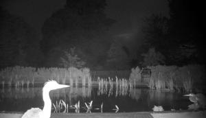 Pond by night....