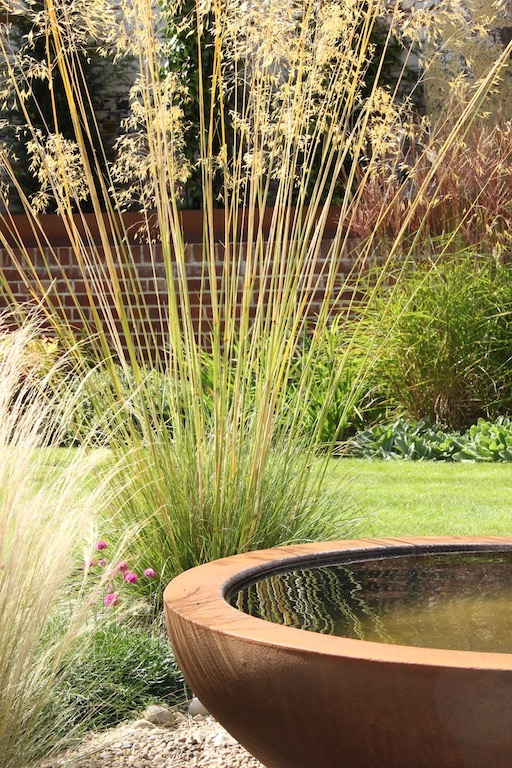 Stipa gigantea reflections in the Urbis water bowl