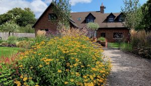 Dramatic Black Eyed Susan in Country Garden by garden designer Amanda Broughton
