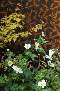 Corten steel screen with Acer and Anemone in Hertfordshire garden design