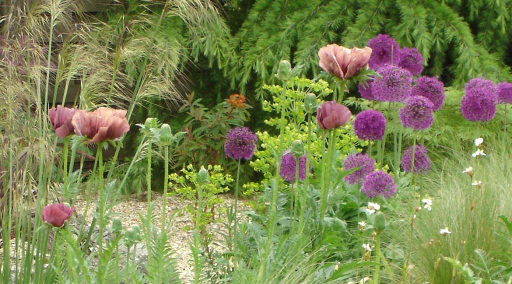 Gravel garden planting in Hertfordshire