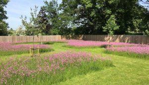 Spring wildflower meadow in Hertfordshire garden design.
